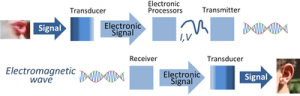 Signal transmission using electronic signal processing. Transducers convert signals from other physical waveforms to electrical current or voltage waveforms, which then are processed, transmitted as electromagnetic waves, received and converted by another transducer to final form.